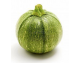Courgette ronde AB