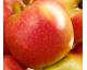 E--- Pomme Jubilée AB 10 kg